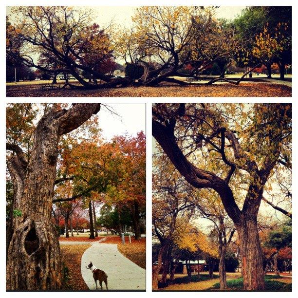 Tietze Park