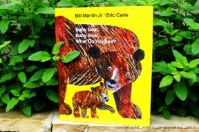 baby-bear-480