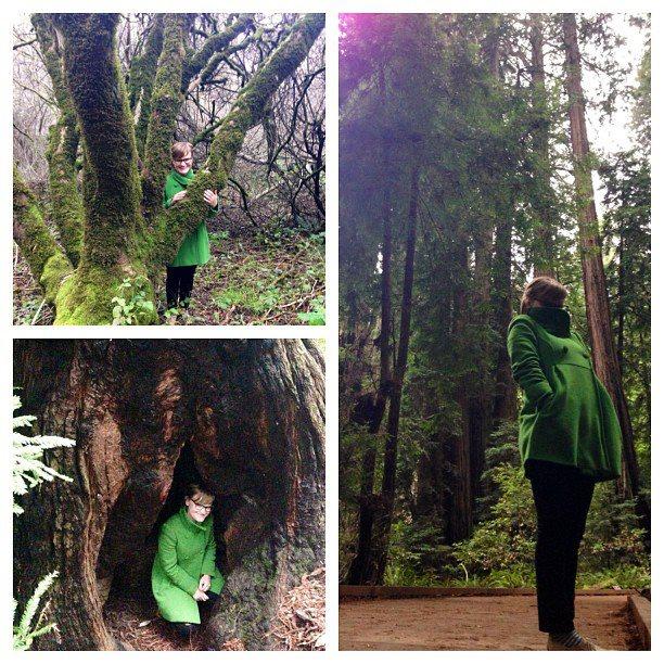 JJ in Trees