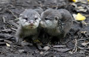 lizzy&andi otters